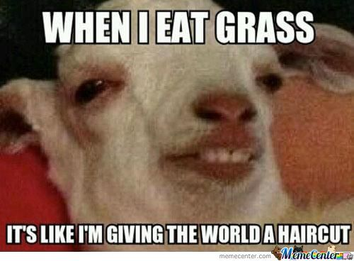 It's Grass They Said...