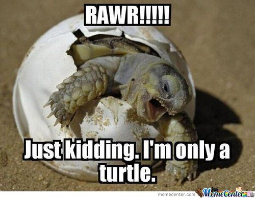 jk only a turtle_o_812467 turtle memes best collection of funny turtle pictures