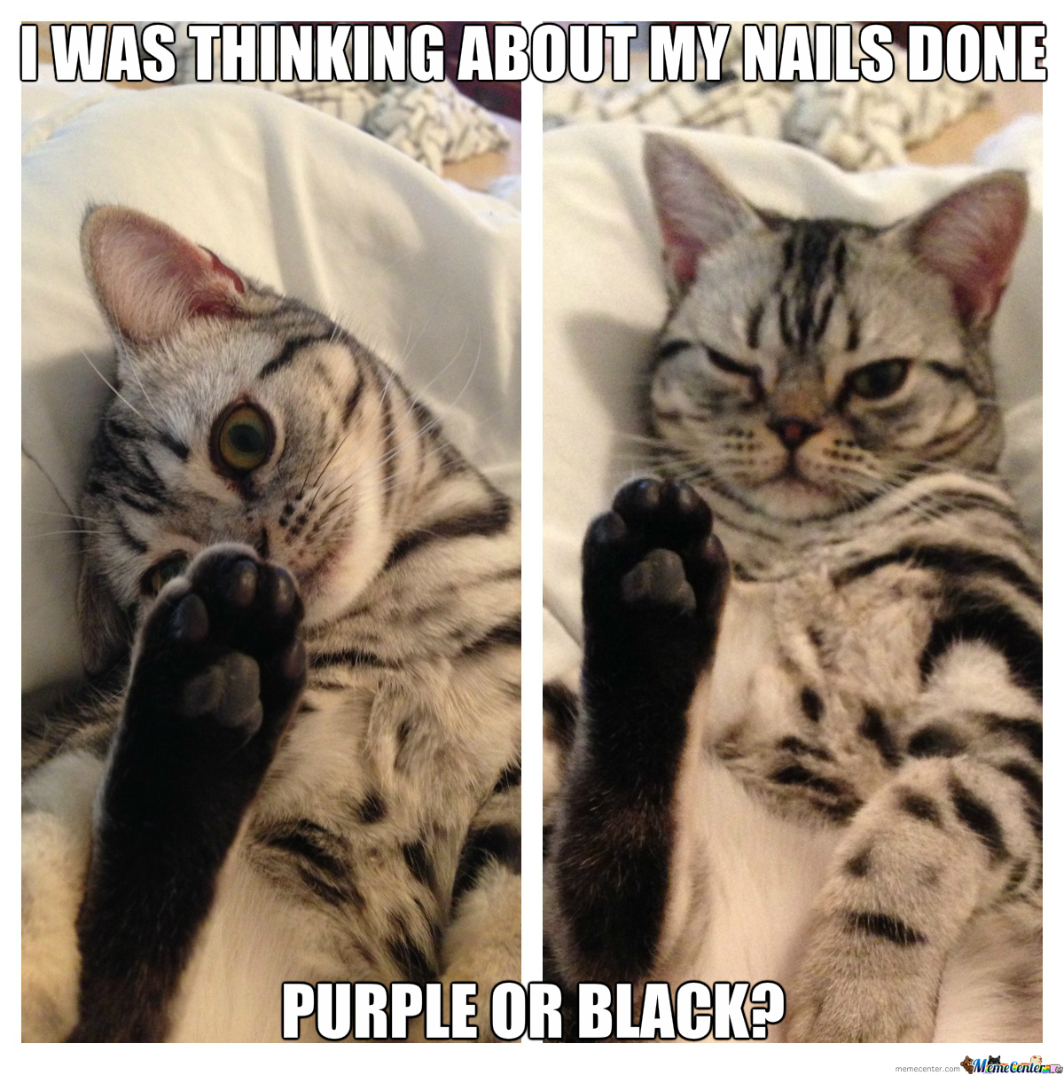 Just A Cat Getting It s Nails Did by cuteasfuck Meme Center