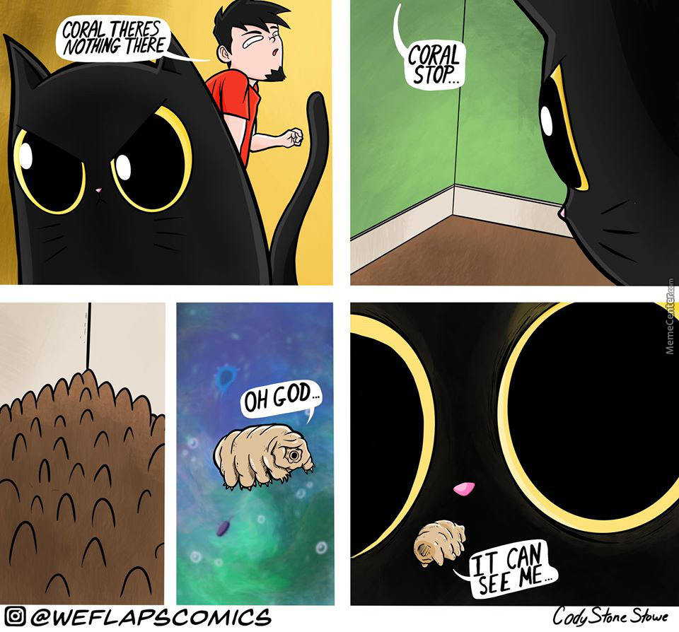Just A Cat Thing