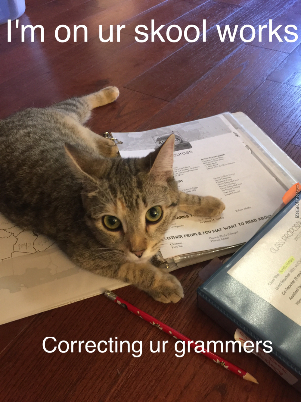 Just My Cat Helping Me Cheat