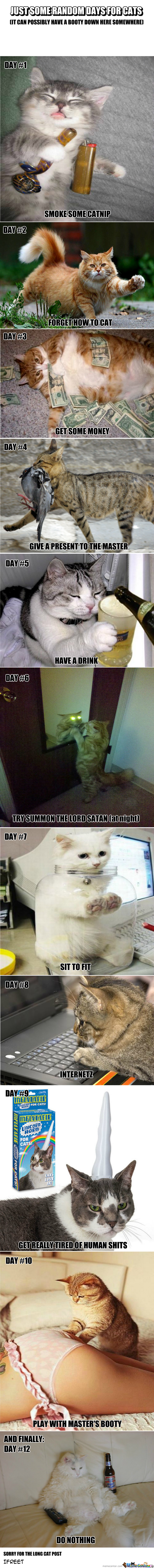 Just Normal Days For Cats