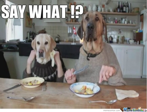 Just two ordinary dogs having lunch