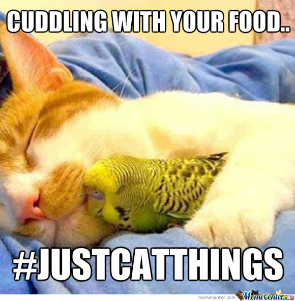 Justcatthings