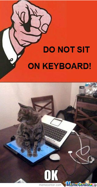 Keyboard Troll Level: Cat