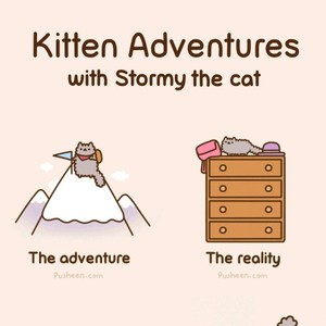 Kitten Adventures With Stormy The Cat