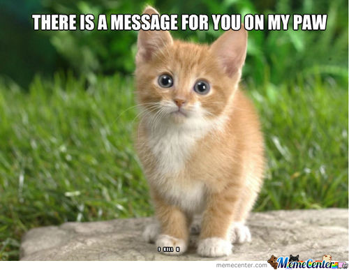 Kitten Has A Message For You