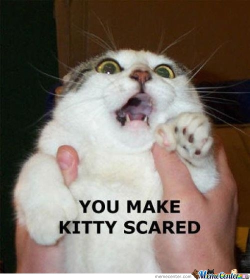 Kitty Scared