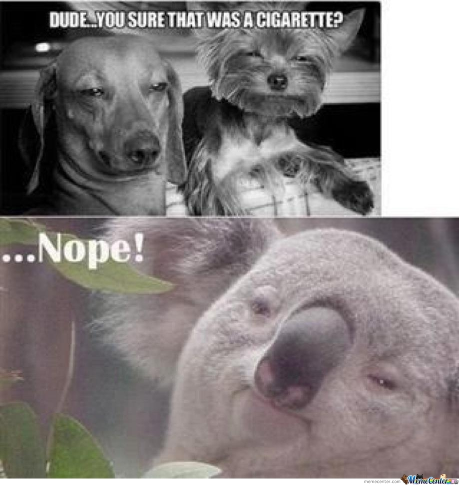 High Koala Meme | www.pixshark.com - Images Galleries With ...