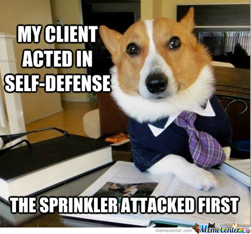 lawyer dog self defense_o_289544 lawyer dog self defense by feature meme center