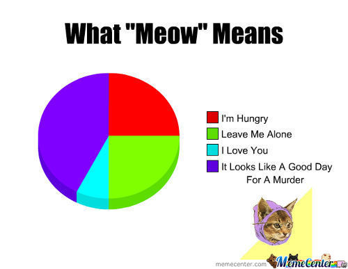 Learn What Cats Are Saying Right Meow