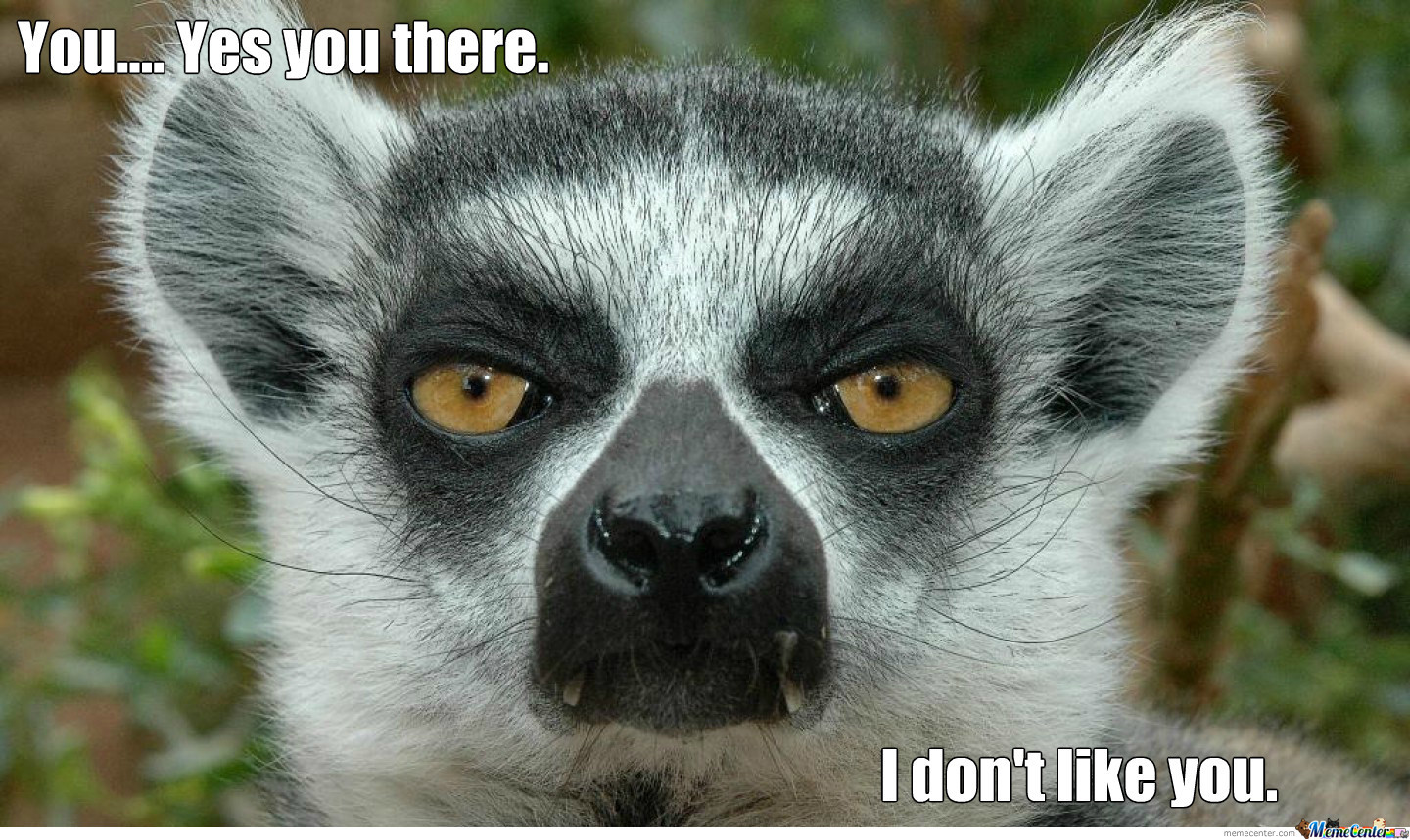lemur is not amused_o_1536453 lemur is not amused by recyclebin meme center