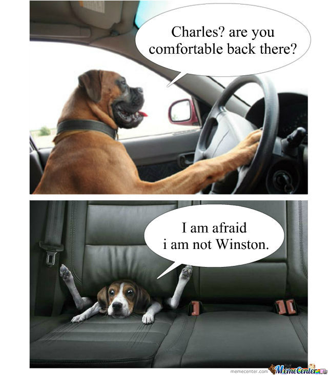 Let A Dog Drive They Said.