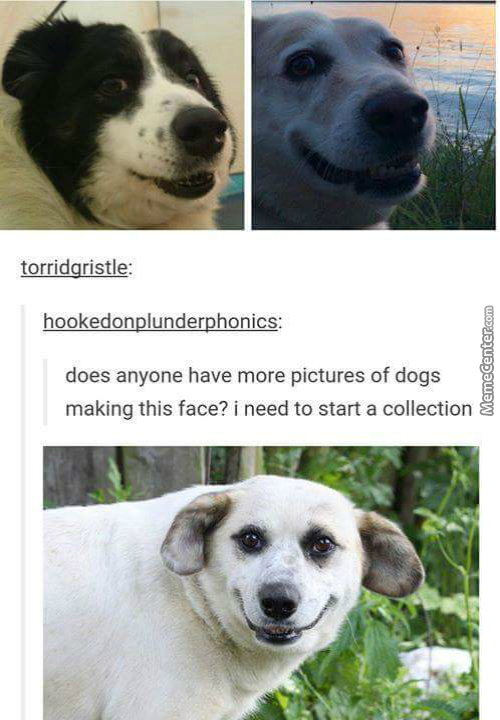 Let's Start A Memecenter Collection Of Dogs Making This Face In The Comments, 'cause Why Not?
