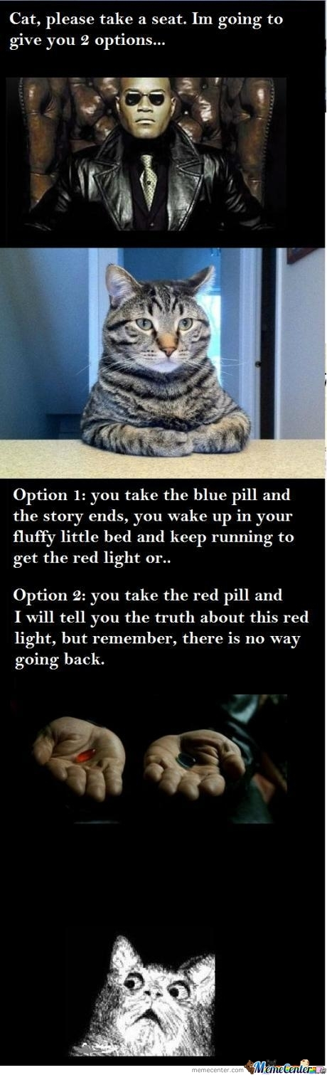 Let The Cat Decide About The Red Light