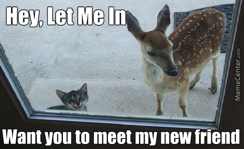 Little Do You Know, We Will Probably Eat Your New Friend...
