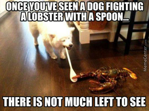 Lobsters Are Immortal. That Dog Had Better Be A Super Saiyan To Put On A Fight Like That