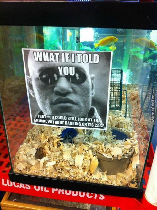 Local Pet Store Is Sick Of Your Shit