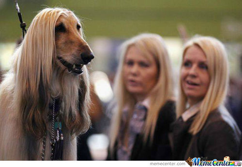 Long Hair Dog