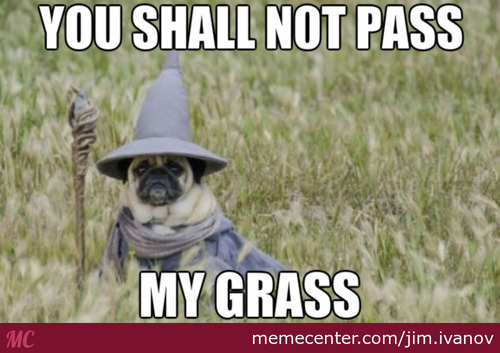 Lord Of The Pugs