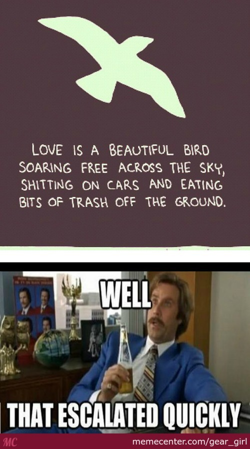 Love Is A Beautiful Bird...