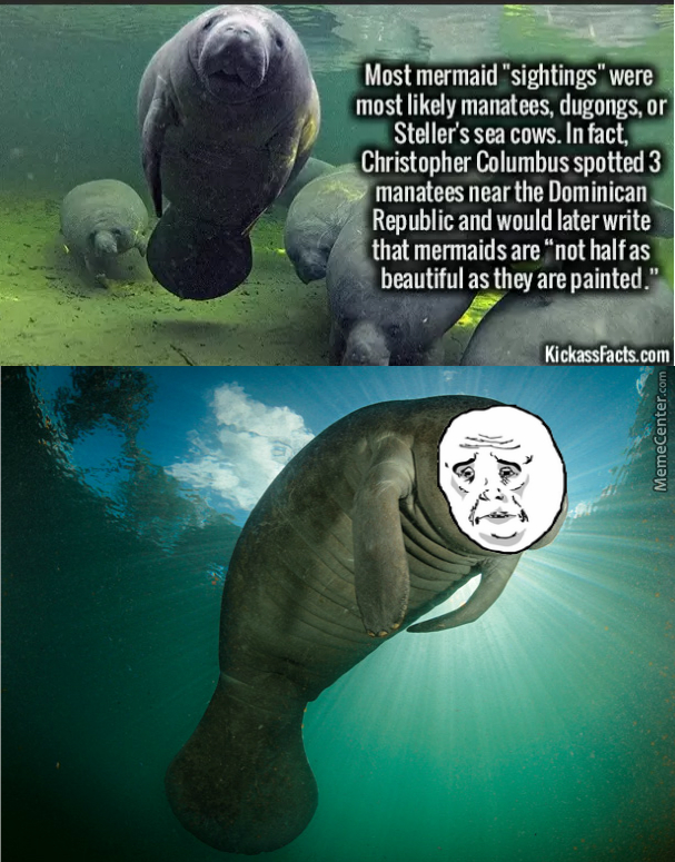 Manatees Are Not Beautiful