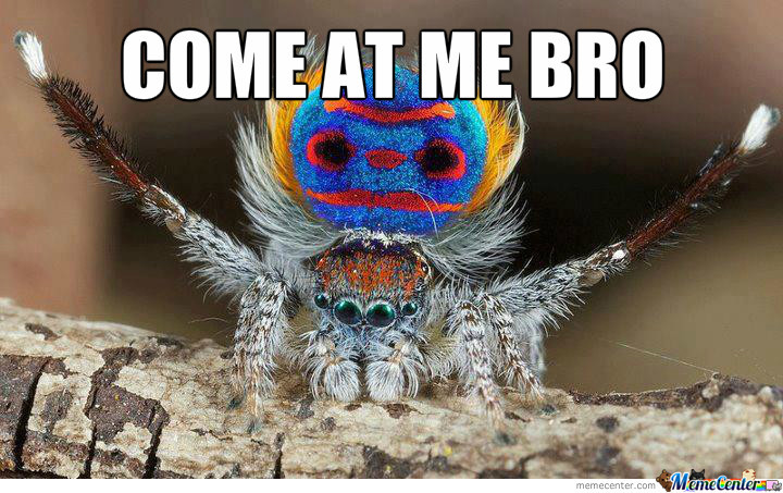 Manly Spider