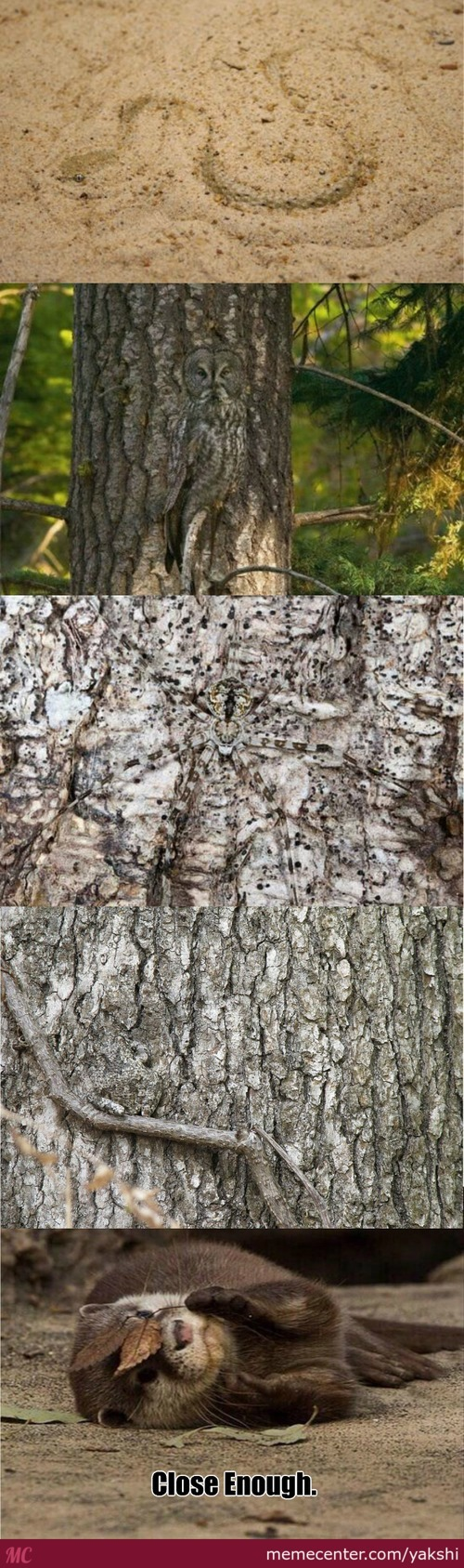 Mastery Of Camouflage