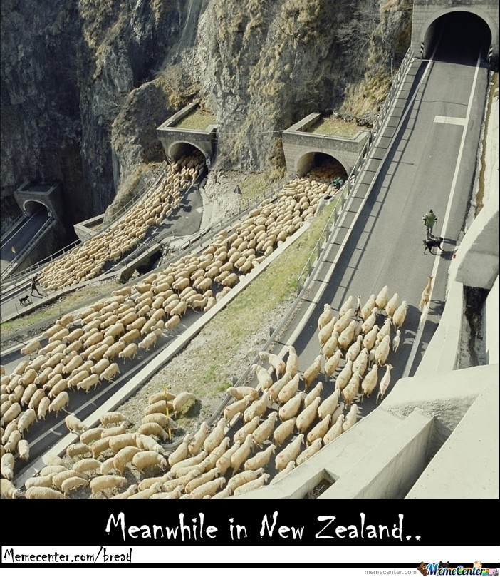 Meanwhile In New Zealand..