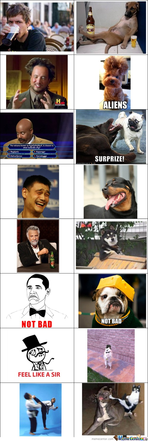 Memes And Their Pets