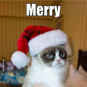 Merry Christmas From Grumpy Cat They Say by kusali - Meme Center