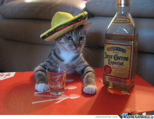 Mexican Cat by awkward - Meme Center