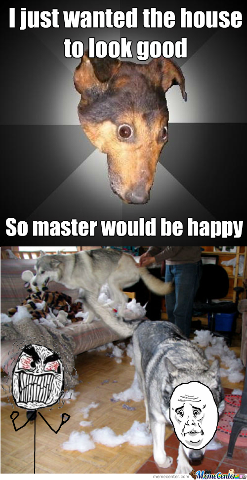 Misunderstood Dog
