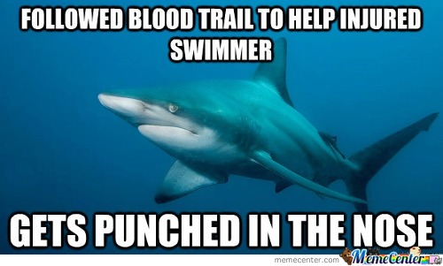 Misunderstood Shark..