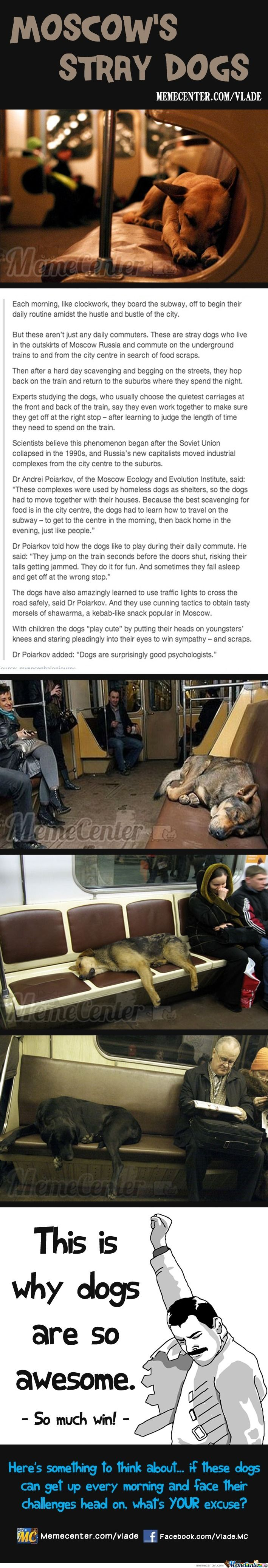 Moscow's Stray Dogs