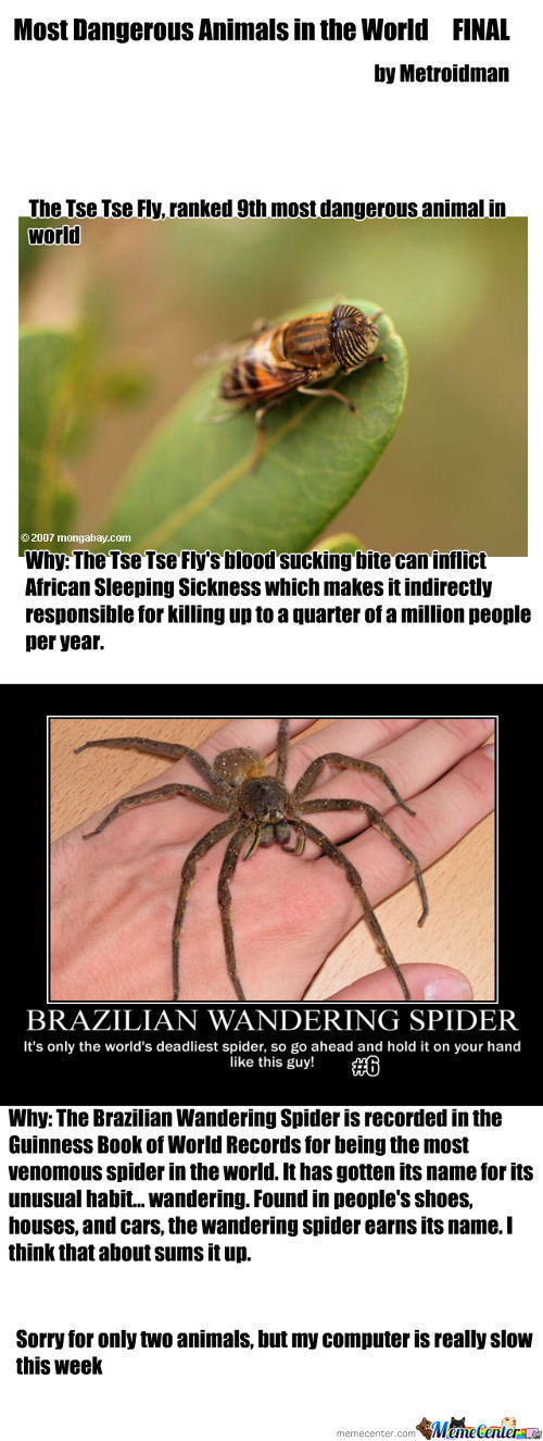 Most Dangerous Animals In The World Final