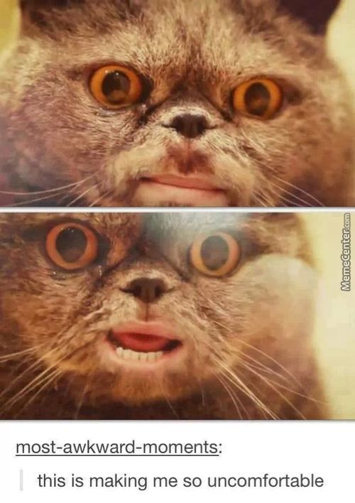 Most Disturbing Cat-Selfie You've Ever Seen!