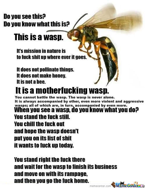Mother F****** Wasps