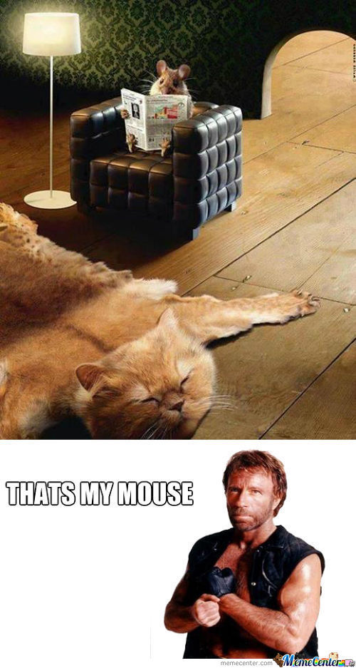 Mouse Chuck Norris