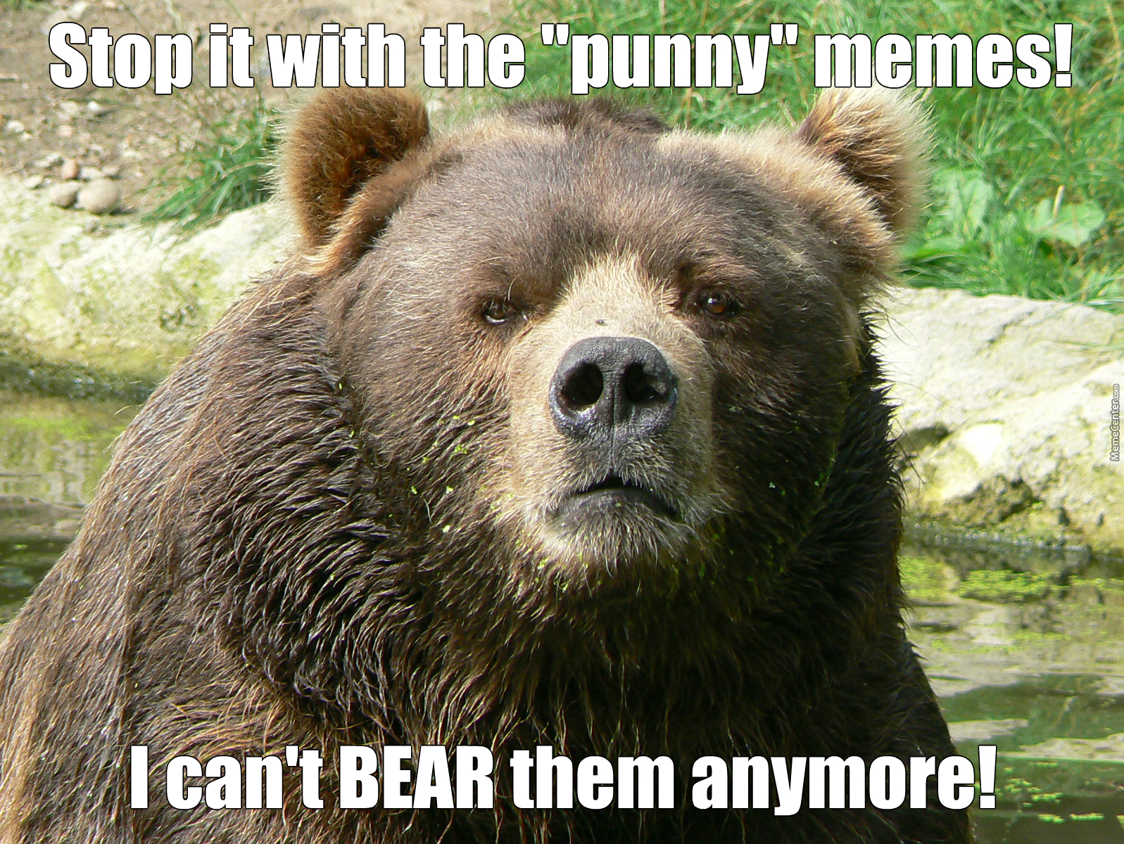 mr grizzly bear_o_2980699 mr grizzly bear by memedude360 meme center