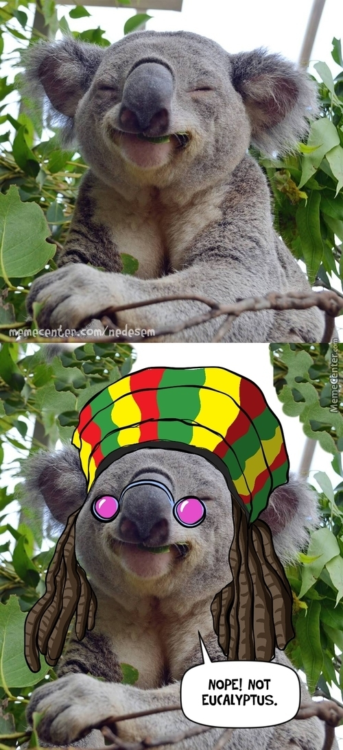 Mr. Koala Is Happy