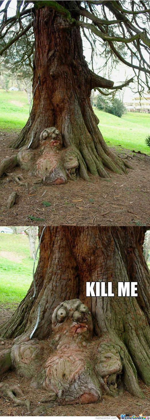 Tree Memes Best Collection Of Funny Tree Pictures