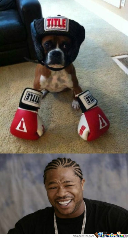 Funny Boxer Dog Meme : My boxer is a by enacional meme center