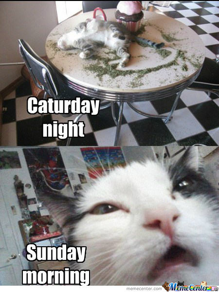 My Cat On Weekends by dekoy - Meme Center