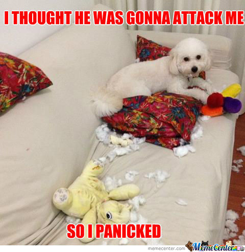My Dog Actually Did This A Minute Ago -.-
