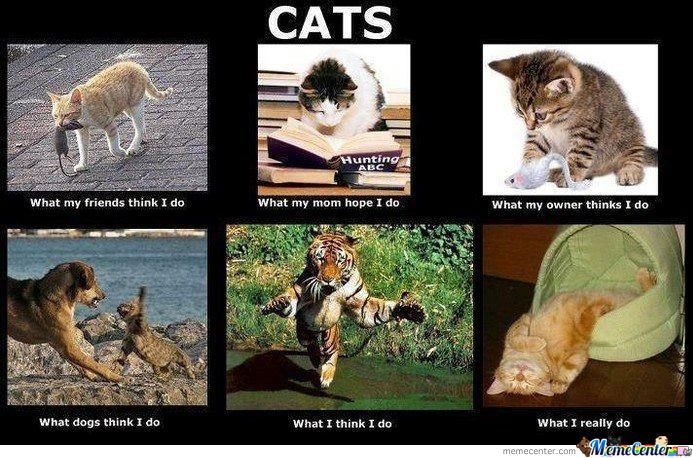 My Life As A Cat.