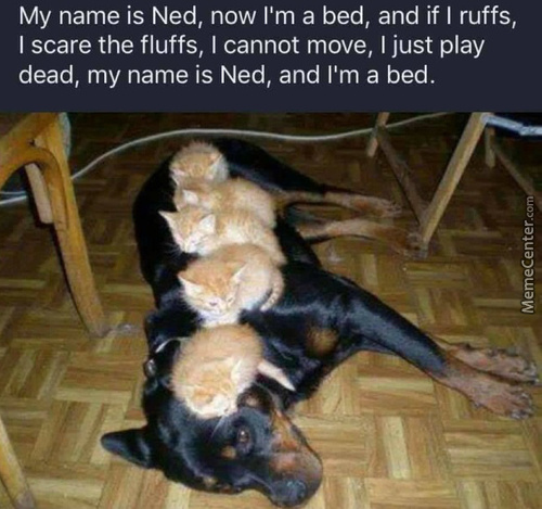 Ned The Bed