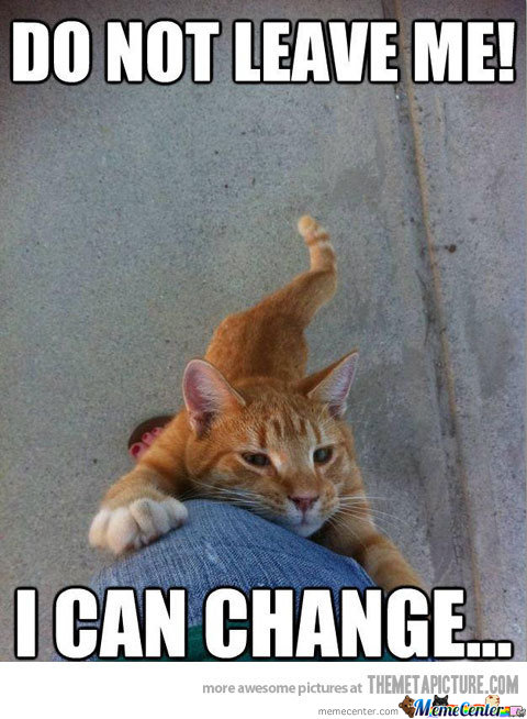 needy cat needs you please stay_o_172689 needy cat needs you! please stay! by thecrimsonshadow meme center