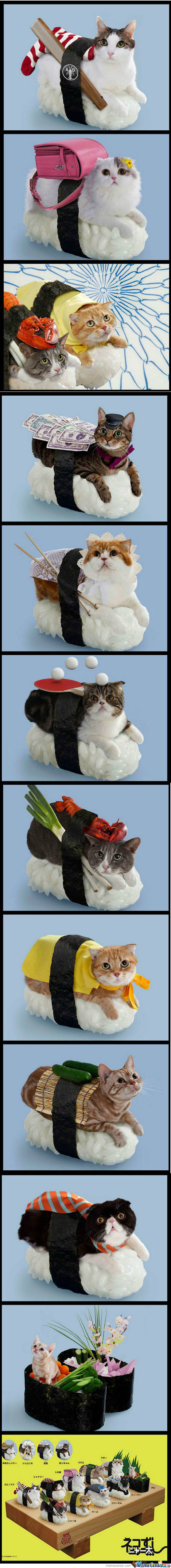 Sushi Cats Compilation
