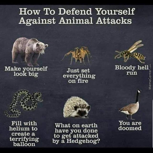 Never Fight A Goose.